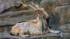 Acestea sunt 5 dintre cele mai ciudate mamifere din lume! Ce specie neobisnuita a trait si in Romania