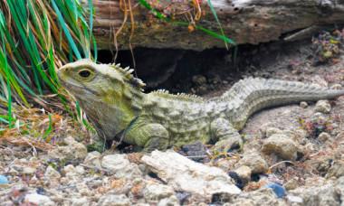Ce specii sunt unice pe Terra. Animalele fara rude apropiate