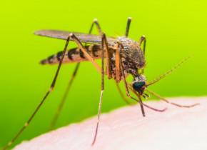 Cum pot infectiile precum coronavirus sa fie transmise de la animale la oameni