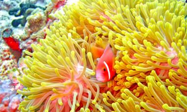 Tragedia record in Marea Bariera de Corali. Ce au descoperit cercetatorii