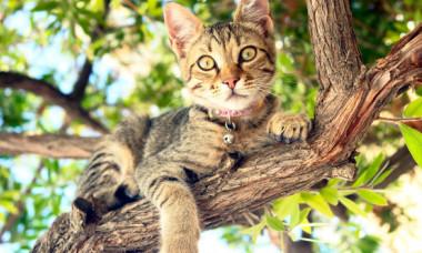 Stiai? Motivul pentru care pisicile adora inaltimile