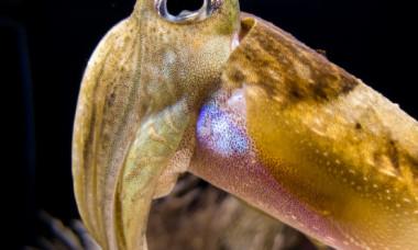 VIDEO: Primele imagini surprinse cu un calamar gigant in apele din apropierea SUA. Cum arata creatura uimitoare