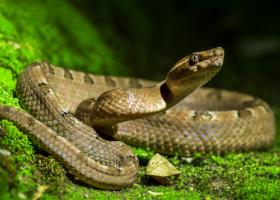 VIDEO: Un barbat din Texas a gasit 45 de serpi cu clopotei sub o casa. Cum a reactionat
