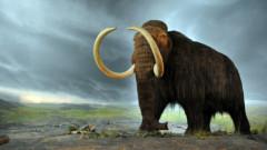 Mamutul lanos, disparut de 10.000 de ani, la un pas sa fie inclus pe lista speciilor in pericol