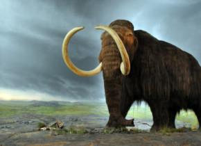 Cercetatorii au descoperit urmele ultimilor mamuti de pe Terra. Unde au trait