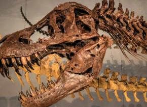 Temutul T.rex avea un simt extrem de dezvoltat. Ce au descoperit cercetatorii