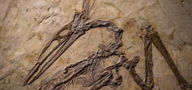 De ce au vertebratele coaste? Ce au descoperit cercetatorii