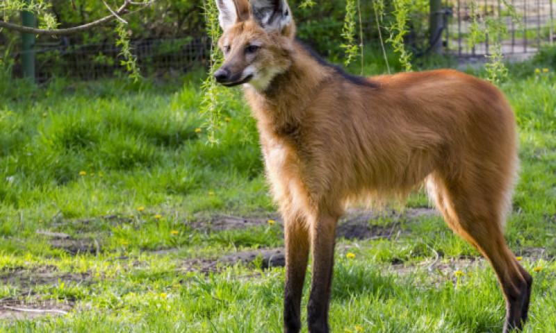 Top 5 animale extrem de bizare de care nu ai mai auzit pana acum. Ce le face atat de deosebite