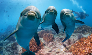 Reactia incredibila a unor delfini cand au vazut un lenes pentru prima data! Unde a avut loc intalnirea neobisnuita