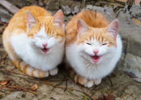 """VIDEO: Doua pisici """"infractoare"""" incearca de ani de zile sa intre intr-un muzeu. De ce esueaza de fiecare data"""