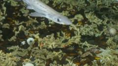 O cresa uriasa de rechini a fost descoperita la 750 m adancime. Cum arata