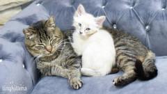 VIDEO: Imagini emotionante cu un motan salbatic ce a devenit bunicul ideal pentru pui de pisica orfani