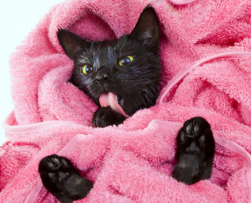 pisica spalat limba (4)