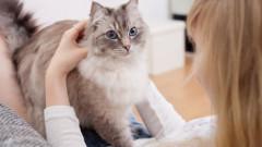 """Un parazit ce """"altereaza mintea"""" e transmis de pisici stapanilor. Ce efecte are asupra creierului uman"""