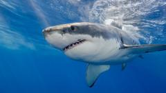 VIDEO: Imagini incredibile cu cel mai mare rechin alb observat vreodata si scafandrii care s-au incumetat sa inoate cu el