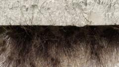 """O cladire """"paroasa"""" ascunde, de fapt, un secret infricosator. Ce animal se ascunde in coltul intunecos"""