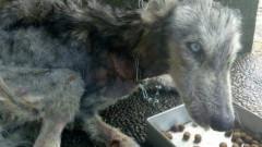 Ajunsese piele si os. Ce s-a intamplat cu un caine husky la scurt timp dupa ce a fost gasit abandonat pe strada