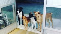 VIRAL: Reactia induiosatoare a 4 caini atunci cand stapanul lor a fost internat in spital