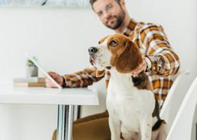 Ce s-ar intampla cu angajatii daca sefii le-ar aduce animale de companie la birou