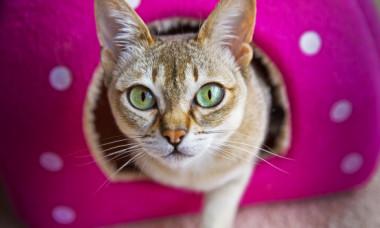 10 lucruri extraordinare despre pisici pe care nu le știai
