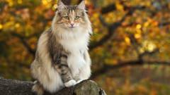 Top 5 cele mai rare rase de pisici din lume. Ce felina era idolatrizata in Egiptul Antic