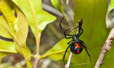 Secretul ascuns în pânza de păianjen. Ce folosesc arahnidele pentru a-și prinde și ucide prada fără să o atingă