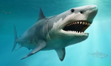 Motivul neasteptat pentru care rechinul masiv megalodon a disparut