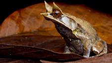 Vietuitoare, ce nu a fost vazuta timp de 10 ani, a reaparut in jungla amazoniana