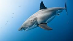 Cel mai fioros animal marin? Ce vietuitoare inspaimanta pana si marele rechin alb