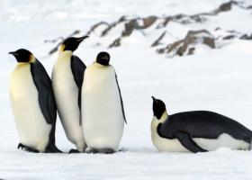 """Evolutie """"in revers""""! Ce animale si-au pierdut abilitati importante de-a lungul timpului"""