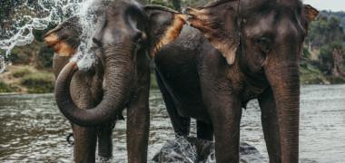 5 transmisiuni in direct cu animale adorabile din intreaga lume pe care le poti urmari de acasa