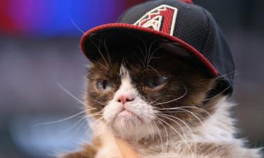 Noua Grumpy Cat? Ce felina a captivat Internetul cu aspectul neobisnuit