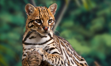 5 feline salbatice de mici dimensiuni de care nu ai auzit pana acum