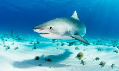Un rechin imens mananca pasari terestre. Cum reuseste