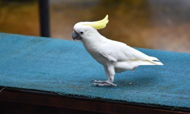Un papagal a fost surprins in timp de indeparta protectia antipasari de pe o cladire: VIDEO
