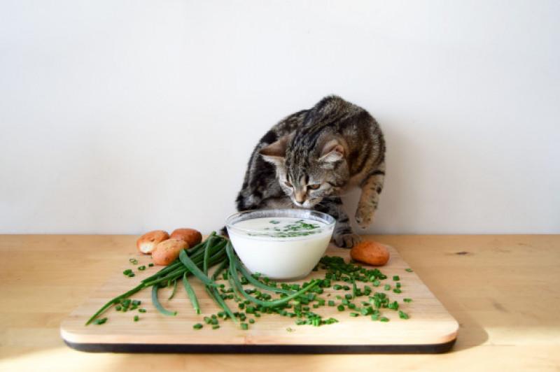 pisica mancare