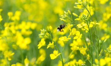 O insecta a fost declarata cea mai importanta vietuitoare de pe Pamant. Ce rol vital are