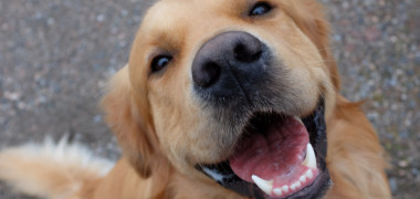 Știai? De ce au câinii nasul umed