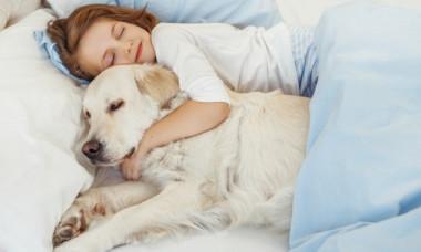 Ce spune pozitia de dormit a animalului tau de companie despre personalitatea lui