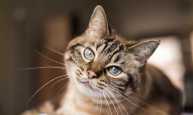 VIRAL: O pisica rebela a eliberat pisicile unui adapost pentru animale. Ce a patit dupa i-a adus mii de fani pe Internet