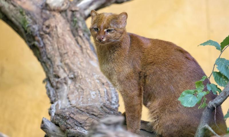 """A adoptat o """"pisica"""" abandonata pe strada, insa a aflat adevarul la veterinar. Ce vietuitoare salvase de fapt"""