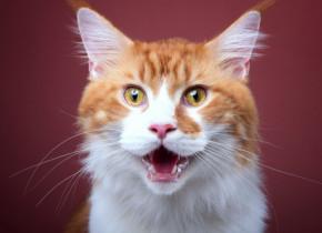 Pisicile au expresii faciale, insa sunt foarte greu de citit. Doar anumiti oameni le pot descifra emotiile