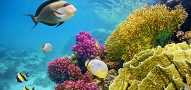 71 de specii au fost descoperite in 2019. Unde au fost gasite