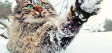 Cum sa ai grija de pisica ta pe timpul iernii