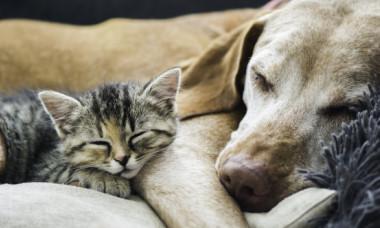 Ce se întâmplă cu animalele de companie care stau în preajma bolnavilor de COVID-19. Avertismentul lansat de veterinari