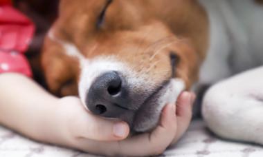 """Boala silențioasă care face ravagii printre câini. Simptomele pe care nu trebuie să le ignori: """"Du-l imediat la veterinar!"""""""