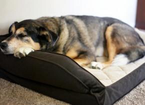 """Boala dureroară care care afectează câinii. Medicii veterinari: """"Nu ignora aceste simptome!"""""""