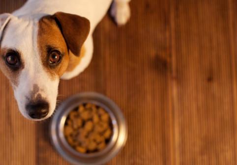 Adevărul despre obiceiul bizar al câinilor. Motivul pentru care își duc mâncarea în alte locuri pentru a o mânca