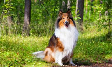 5 dintre cele mai faimoase animale din istorie. Cum au ajuns vedete