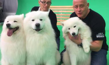 Editie aniversara Digi Animal Club - 200 de editii cu si despre animalele pe care le indragim